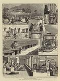Tea Cultivation in British India