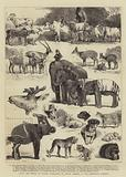 HRH the Prince of Wales's Collection of Indian Animals at the Zoological Gardens