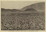 """""""Wideawakes"""" hatching their Eggs at Ascension Island"""