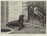 """The New Neighbour"", Cape Sea Lion and Adjutant Bird"
