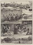 The Australian Wool Industry, scenes on a New South Wales Sheep-Farm
