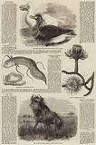 Sketches of Wildlife, Botany and Birds