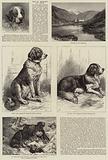 The St Bernard Dog Show