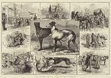 The Coursing Meeting at Altcar, near Liverpool