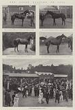 The Ascot Meeting of 1901