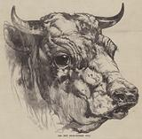 The Best Short-Horned Bull