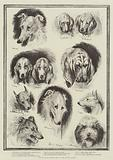 Sketches from the Dog Show at the Crystal Palace