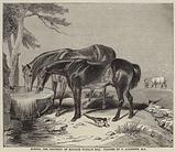 Horses, the Property of William Wigram, Esquire