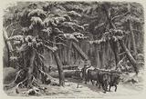 Lumbering in New Brunswick, Lumbermen at Work in the Forest