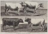The International Cattle Show at Poissy