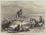 Sketches in Cyprus, Goatherd watering his Flock in the Plains of Paphos