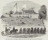 The late Disaster at Mallaghea, Return of Part of the 3rd West India Regiment to Freetown