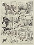Cart-Horse Show at the Agricultural Hall