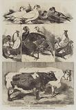 The Poultry and Cattle Show at Birmingham