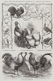 Prizes from the Metropolitan Exhibition of Poultry and Pigeons