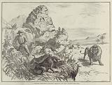 A Strange Defensive Alliance, Baboons and Man against the Lion