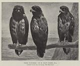 Three Watchers