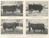 The Birmingham Fat Stock Show, Royal and other Prize Winners