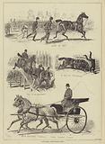 Alexandra Park Horse Show