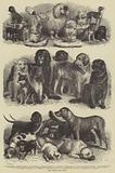 The Leipsic Dog Show