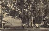 Cochinchina – Saigon – Botanical Garden