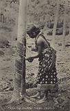 Tapping rubber trees, Ceylon