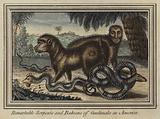 Remarkable serpents and baboons of Gautimala in America