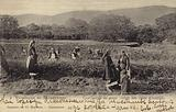 Women rose pickers in the Rose Valley, near the town of Kazanlak, Bulgaria, first half of 20th Century