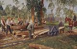 German troops processing timber for use in trenches and shelters, World War I, 1914-1916