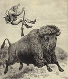 Tossed by a prairie bull