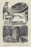 Antiquities of Simbabwe in South Africa
