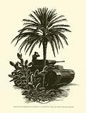 German Panzer in Africa, World War II