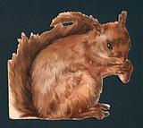 Red squirrel, Victorian scrap