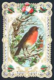 Singing Robin on Branch, Christmas Card