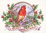 Robin singing on branch, Christmas Card