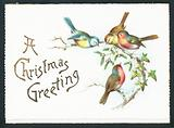 Blue Tits and Robins, Christmas Card