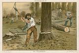 The lumberjack