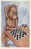 Chimpanzee pondering a chess move