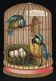 Two blue tits in a cage, Christmas greetings card