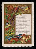 Birds, flowers and plants, Christmas greetings card