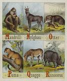 Alphabet of Beasts
