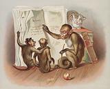 Monkey teaching