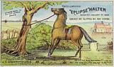 Tethered Horse