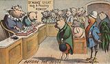 Hog in Court