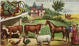 Farm House And Animals