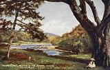 Moore's Tree, Meeting of the Waters, Ovoca, via Holyhead and Kingstown the Royal Mail Route