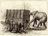 Attempt to remove Jumbo, the great elephant, from the Zoological Gardens