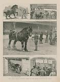 The Shire Horse Society's show at the Royal Agricultural Hall