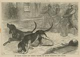 Sir Charles Warren's new criminal trackers: Mr Brough's bloodhounds being trained
