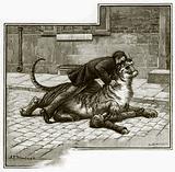 Jamrach's - tackling the tiger